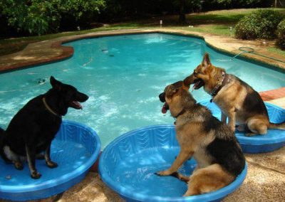 pets in pools